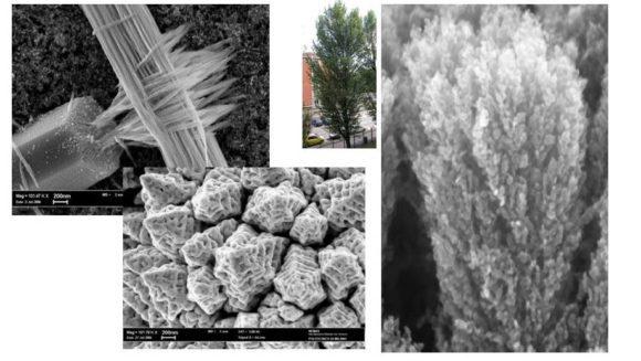 esempi di strutture nanometriche bio-ispirate